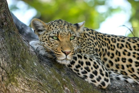Wild About Sri Lanka