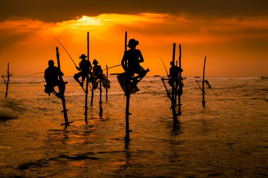 Silhouettes of the traditional fishermen at the sunset in Sri Lanka