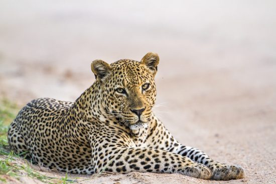 Search for the Leopard in Sri Lanka
